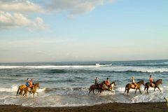 [オプショナルツアー]乗馬体験