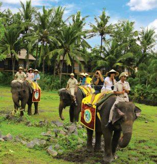 [エレファントバックサファリ]アフリカ・パノラマエリアを象に乗ってお散歩。動物たちを間近で体感できます
