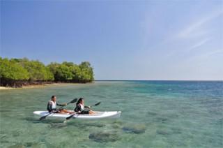シーカヌーでマングローブの海辺を散策