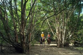 ザ ムンジャンガンでは、乗馬コースも多種